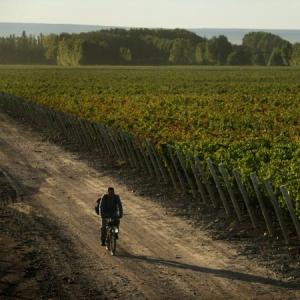 Finca La Celia, caminos del vino